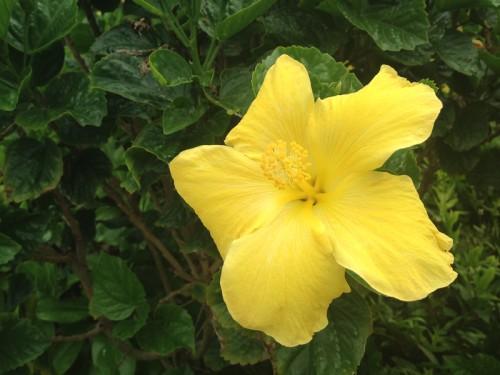 AE_Kauai_Flower