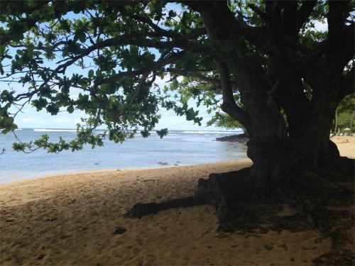 AE_Kauai_Tree