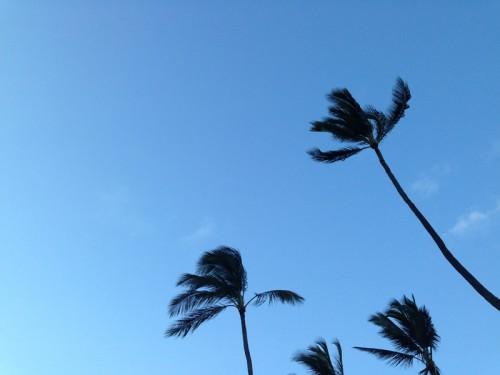 AE_Kauai_Tree2